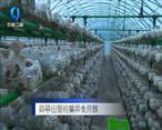 农村大市场 四季出菇的德祥食用菌