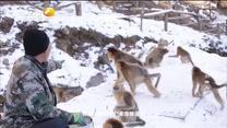 红黑大战故事 秦岭引猴人
