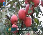 中国农资秀(2020-11-19)