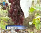 """农村大市场 冬季上市的葡萄——""""冰美人"""""""
