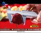 天天农高会 (2020-11-23)