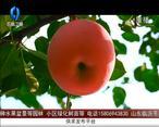天天农高会 (2020-12-03)