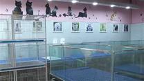 违规销售宠物狗 多家宠物店被取缔