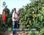 中国农资秀(2020-12-16)