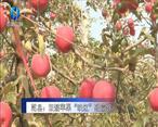 """农村大市场 乾县:双矮苹果""""映红""""致富路"""