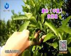 中国农资秀 (2020-12-27)