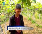 农村大市场 供销带动消费扶贫 助力陕西乡村发展
