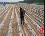 中国农资秀(2021-01-24)