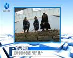 """农村大市场 反季节的羊肚菌""""钱""""景广"""