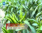 農村大市場 漢濱供銷:多措并舉 繪就鄉村振興新藍圖