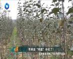 中国农资秀 (2021-03-26)
