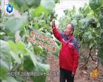 中国农资秀 (2021-04-24)