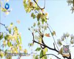 中国农资秀 (2021-04-26)