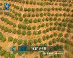 中国农资秀 (2021-05-18)