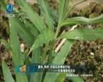 中国农资秀 (2021-06-15)