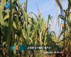 中国农资秀(2021-6-17)