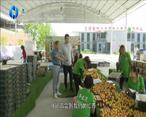 农村大市场 电商助力太平镇百年红杏大发展