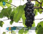 中国农资秀 (2021-06-22)