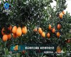 中国农资秀(2021-07-07)