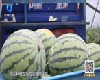 中国农资秀(2021-07-16)