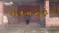 百家在线观看日韩AV电影 会变脸的羊