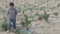 万亩黄沙变绿洲 女子投身沙漠造林三十年