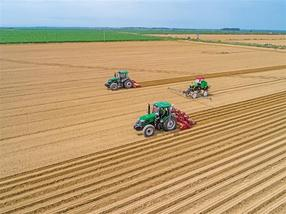 大荔:抢抓农时种植红萝卜