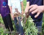 中国农资秀 (2021-08-31)