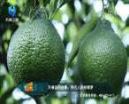 中国农资秀 (2021-09-01)