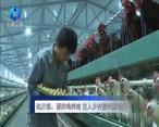 农村大市场 赵庄镇:蛋种鸡养殖 注入乡村振兴新动力
