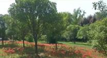 [西安]闭园一个月 西安植物园重新对外开放