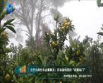 中国农资秀 (2021-09-23)